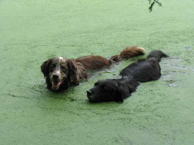 Loading photo of Emma and Squeak swimming...